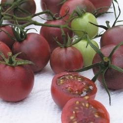 Pomodoro 'Black Cherry'