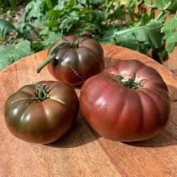 Pomodoro 'Black Krim'