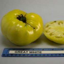 Pomodoro 'Great White'