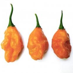 Carbonero Orange