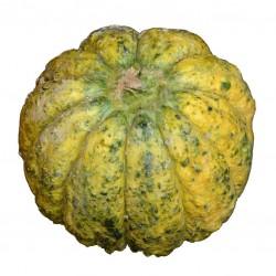 Melone 'Rospo di Bologna'