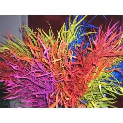 Stelo di Grevillea colorata