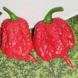 Peperoncino 'Carolina Reaper'