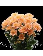 Fiore a Mazzetto