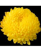 Fiore a Palla